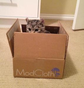 Mod Kitty